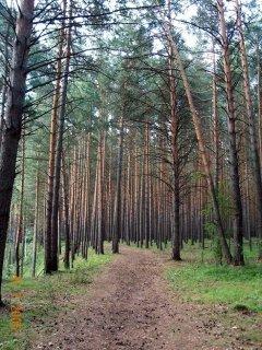 ложится операцию работа в лесу в омске и омской области организации недалеко станциии